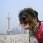 上海生活10年越え